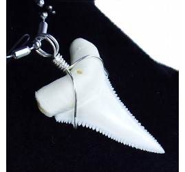 30-34.9 mm real great white shark tooth silver winding necklace pendant GW30 lower or upper