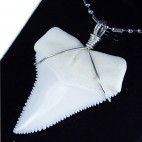 45-49.5 mm real Upper great white shark tooth silver winding necklace pendant GW45U