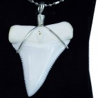 50-54.5 mm real Upper great white shark tooth silver winding necklace pendant GW50U