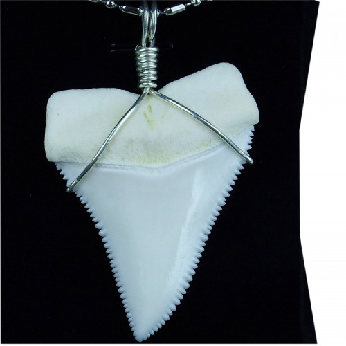 54.5-59.4 mm real Upper great white shark tooth silver winding necklace pendant GW55U