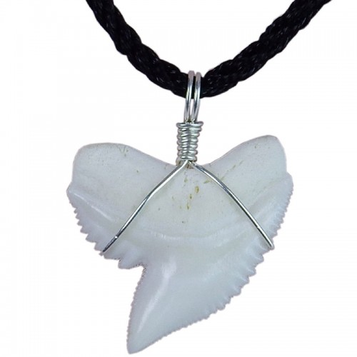 25 30 mm real tiger shark tooth necklace sterling silver winding 25 30 mm real tiger shark tooth necklace sterling silver winding surfer pendant aloadofball Gallery