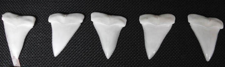 Full teeth from same jaw